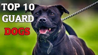 TOP 10 BEST GUARD DOGS - 2018