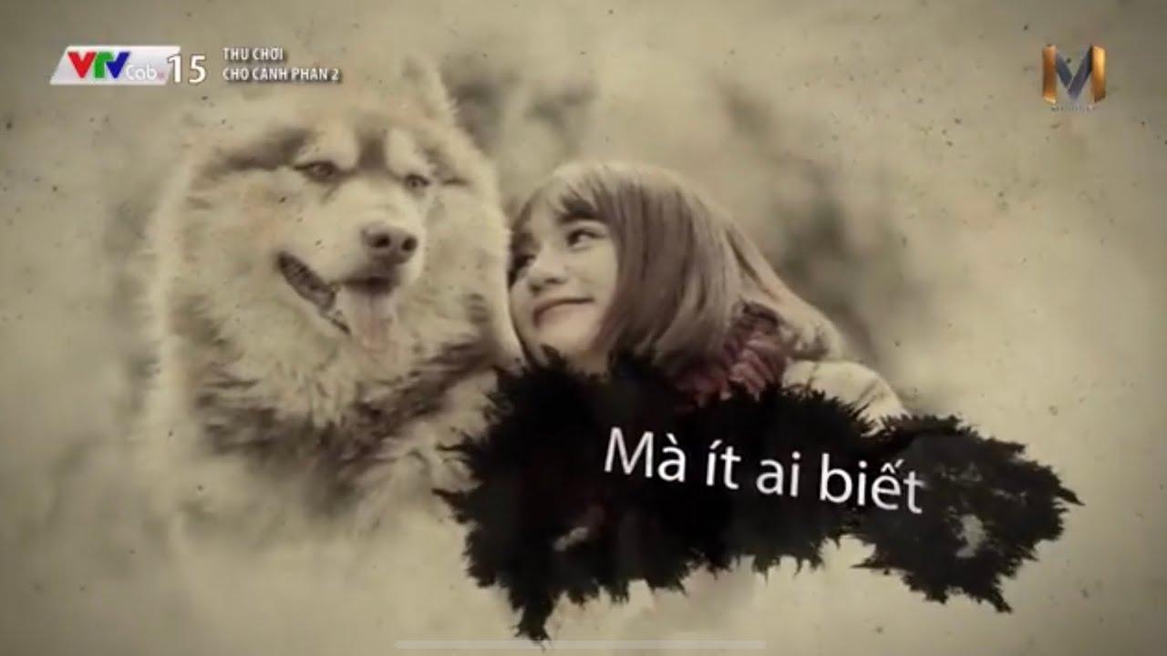 Mật Alaska - Sự ra đi cảm động chú chó nổi tiếng nhất VIệt Nam - đến phút thứ 16 tôi đã khóc