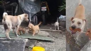 Người lạ cho đùi gà, chó mẹ đói lả vẫn mang về cho đàn con