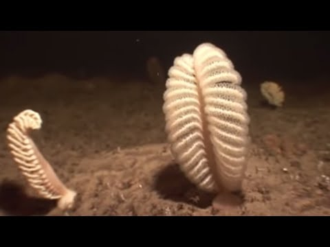 how to move a sea pen