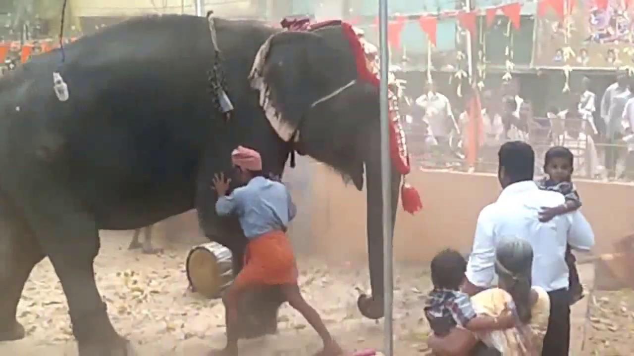 ആന ഇടഞ്ഞപ്പോൾ സംഭവിച്ചത് | Elephant attack 2019| Elephant Attacks Kerala