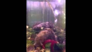 Морской аквариум(, 2013-04-06T19:39:06.000Z)