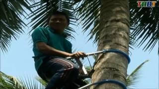 Thiết bị leo dừa - Lên sóng ĐTH Bến Tre LH 0987199568
