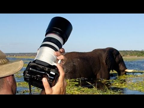 What Camera and Lens to Take on Safari for Wildlife?