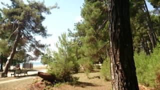 Pitsunda Пицунда Абхазия 2013 июль(Это видео создано с помощью видеоредактора YouTube (http://www.youtube.com/editor), 2013-08-19T18:45:49.000Z)
