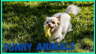 Я РЖАЛ ПОЛ ЧАСА , СМЕШНЫЕ ЖИВОТНЫЕ , ПРИКОЛЫ С КОТАМИ И СОБАКАМИ, ЛУЧШИЕ ПРИКОЛЫ, Funny Pets 10