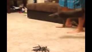 Кот испугался паука