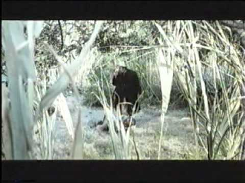 la isla del tesoro 1972 orson welles