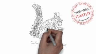 Как нарисовать умную белку(Как нарисовать поэтапно карандашом за короткий промежуток времени понравившегося персонажа или предмет...., 2014-06-29T08:35:49.000Z)