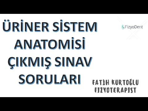 Üriner Sistem | ANATOMİ ÇIKMIŞ SINAV SORULARI -I #vize #final | Sistemler