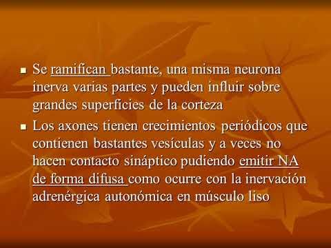 introducción-a-la-farmacología-del-snc