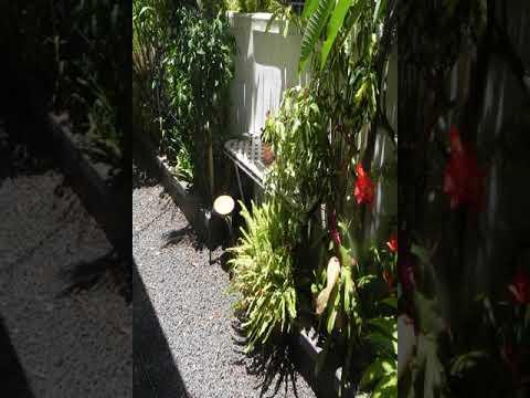 Open Air Café & Apartment - Port Louis - Mauritius