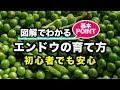 カインズ野菜図鑑 エンドウの育て方 の動画、YouTube動画。