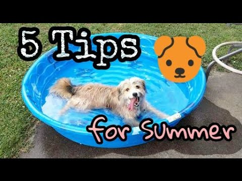 How to take care of your dog during summer in hindi | Tips and tricks | Doggies squad |