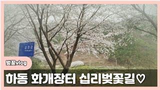 [중고차 여자딜러] 봄구경? 화개장터 십리벚꽃길 vlo…