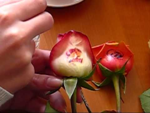 multifunctional flower printer  πολυ - εκτυπωτές