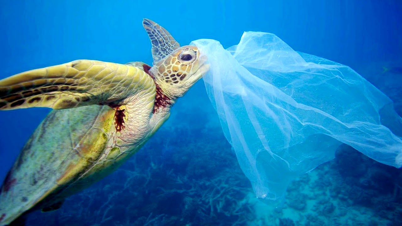 New Zealand Bans Single-Use Plastic Bag. Joyous News!