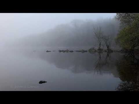 NATURE SOUNDS FOR RELAXATION-Tranquility-Bird Song-w/o Music-Dawn Chorus-Soothing Meditation