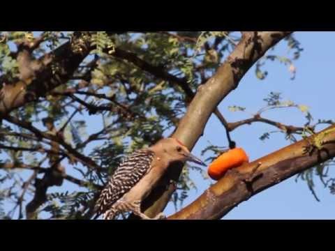 Southeast Arizona Birds - Relaxing