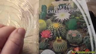 Отсчёт: всходы кактуса.