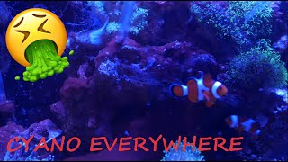 homepage tile video photo for Disgusting Reef Tank, Vibrant Aquarium Cleaner results