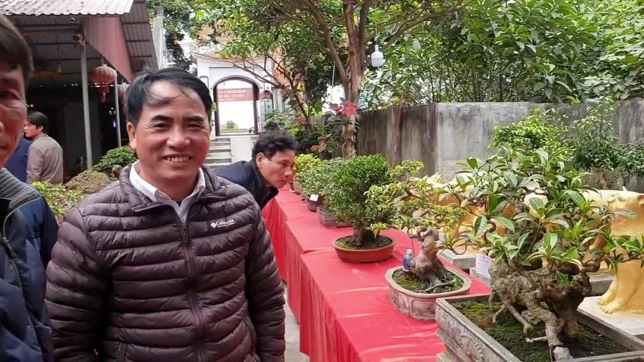 SH.2327.Cây Si Bonsai mini quá đẹp luôn tại Chi hội 1 SVC Phố Hiến. tp Hưng Yên