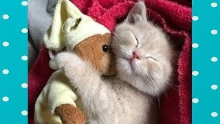 How Cute Moment of KITTENS When Falling Asleep! || Funny Babies and Pets