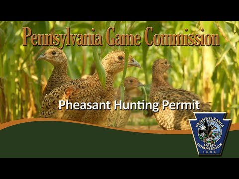 Pheasant Hunting Permit - YouTube