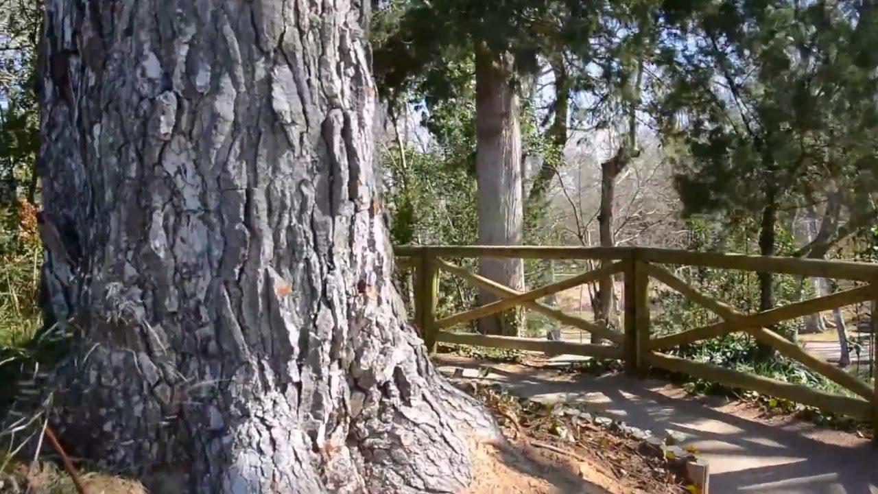 La monta a rusa aranjuez jard n del pr ncipe youtube - Jardin del principe aranjuez ...
