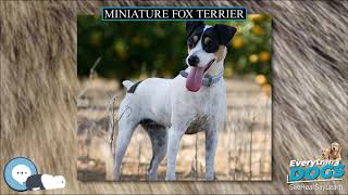 Miniature Fox Terrier  Everything Dog Breeds