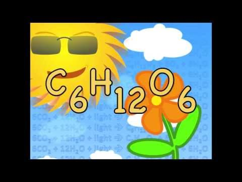 photosynthesis-equation-song---biology-lesson