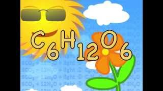 Photosynthesis Equation Song - Biology Lesson