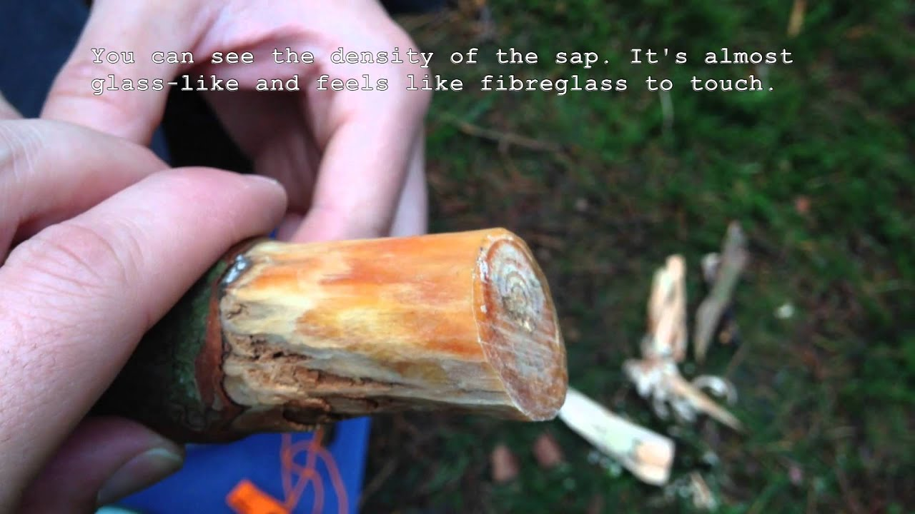 bushcraft finding fatwood and lighting a fire using firesteel - Fatwood