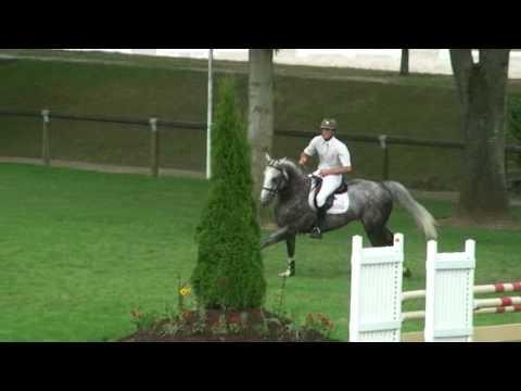 ♂ Padock du Plessis- jumping stallion  (SFA) by Kannan
