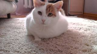 "Любимый кот умер ""Кузя"""