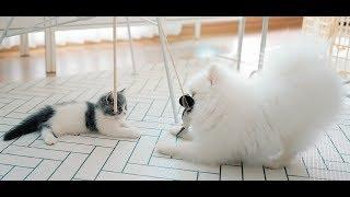 "[vlog] raising munchkin kitten ""Soseol""' (ep 4)"