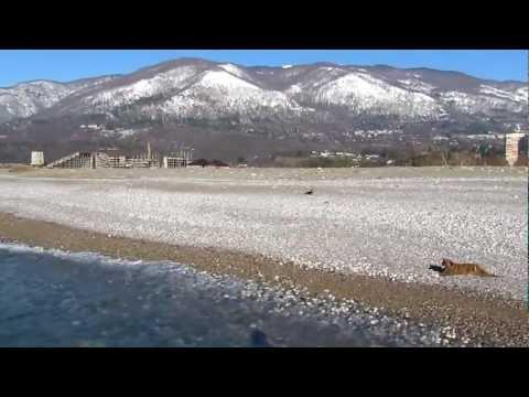 Зимний пляж Гагры. 5 февраля 2012
