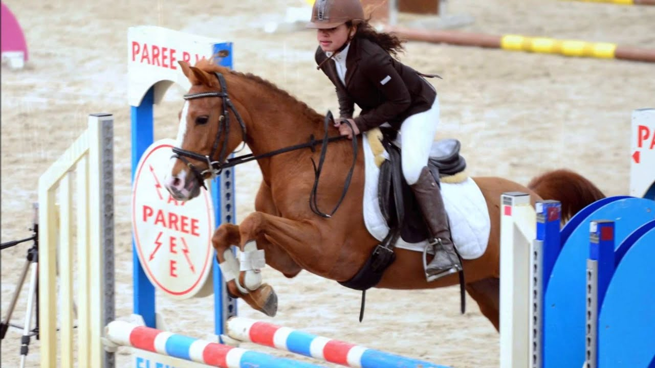 Show jumping pony for sale springpony te koop youtube - Te koop ...