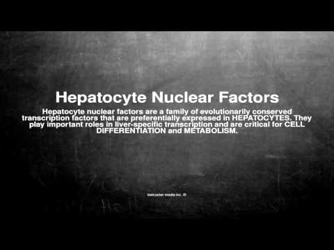 Medical vocabulary: What does Hepatocyte Nuclear Factors mean
