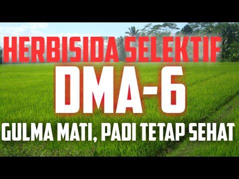 review-dma-6---herbisida-selektif-untuk-gulma-di-sawah