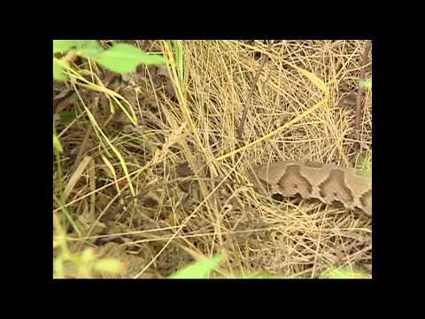 Snakes of Kentucky