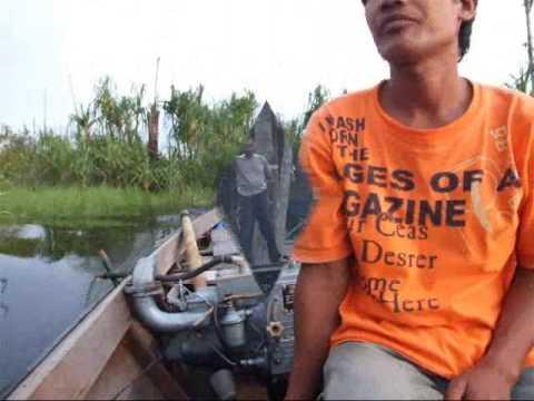 Borneo   Mawas