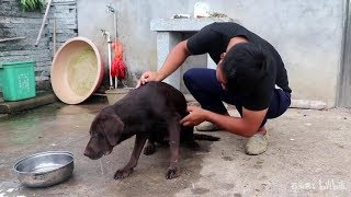 2 years ago, 300 yuan to buy a dog, now sick for 2 days do not eat or drink,