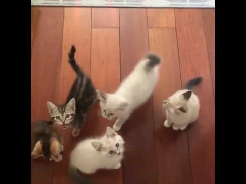 Hungry Kittens | Cute Kittens Meowing For Food