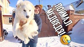 У собаки нашли пулю! Биле снится Тузик, ее друг!