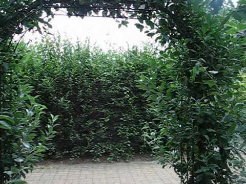RHS Garden Wisley - Surrey #5