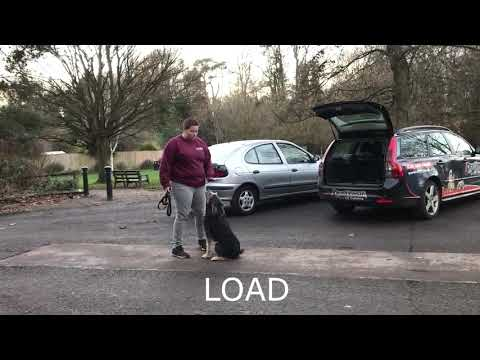 1 year old bearded collie/poodle mix, ROSA | London Dog Training