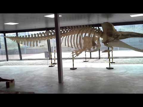 1 Teil Aquarium (Holland)
