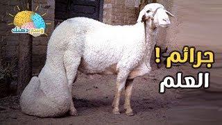 vuclip شاهد ابشع جرائم العلم في الحيوانات !