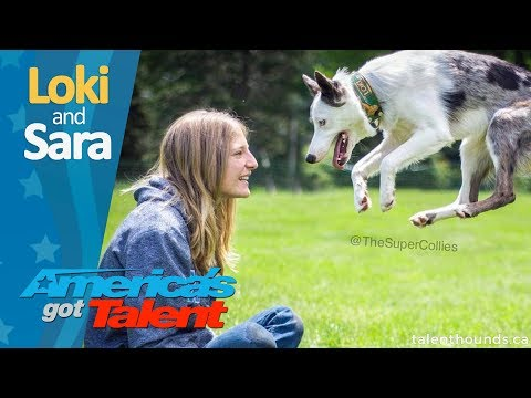 Exclusive behind the scenes on Loki the Puppy and The Super Collies from America's Got Talent